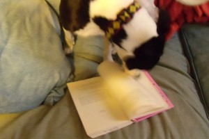 I come back to the couch to find Turk furiously whipping through the pages of my book...literally TURNING THE PAGES...