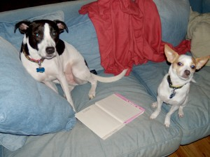 Canine Book Club