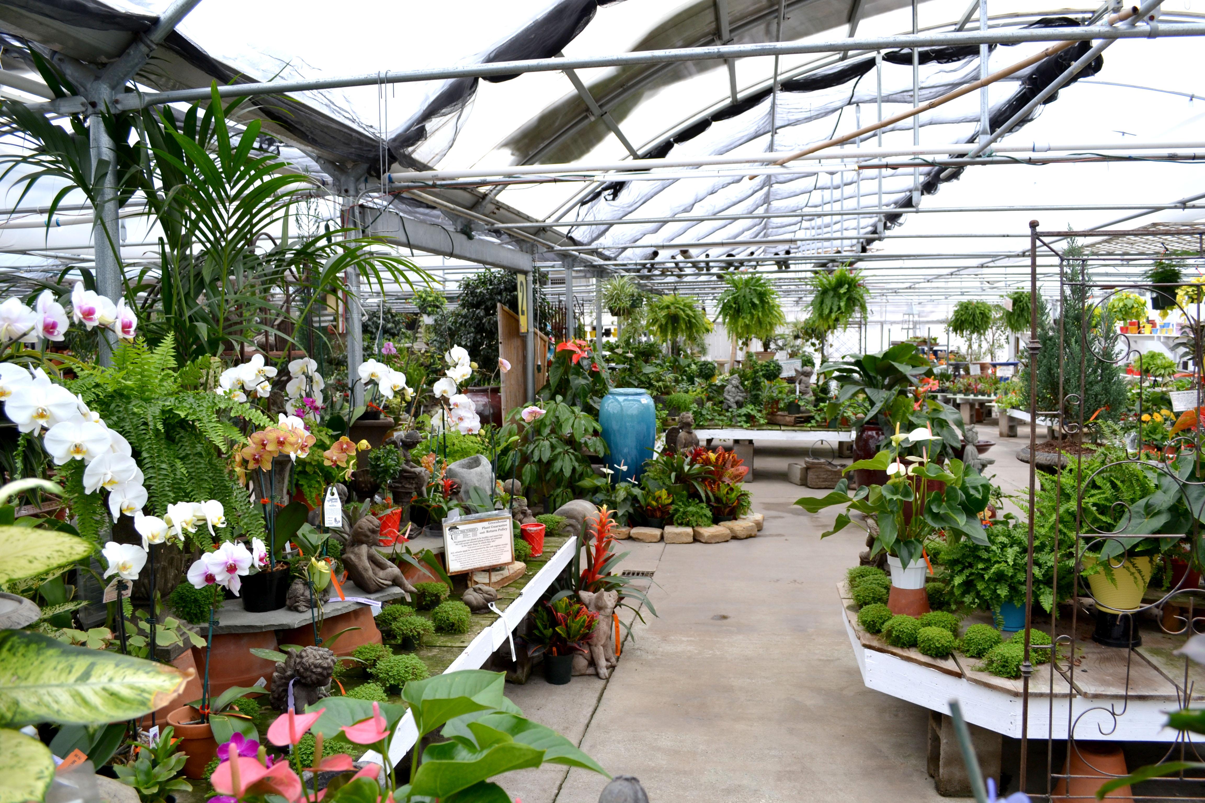 Emily daniel s succulent adventure at family tree for Garden design nursery