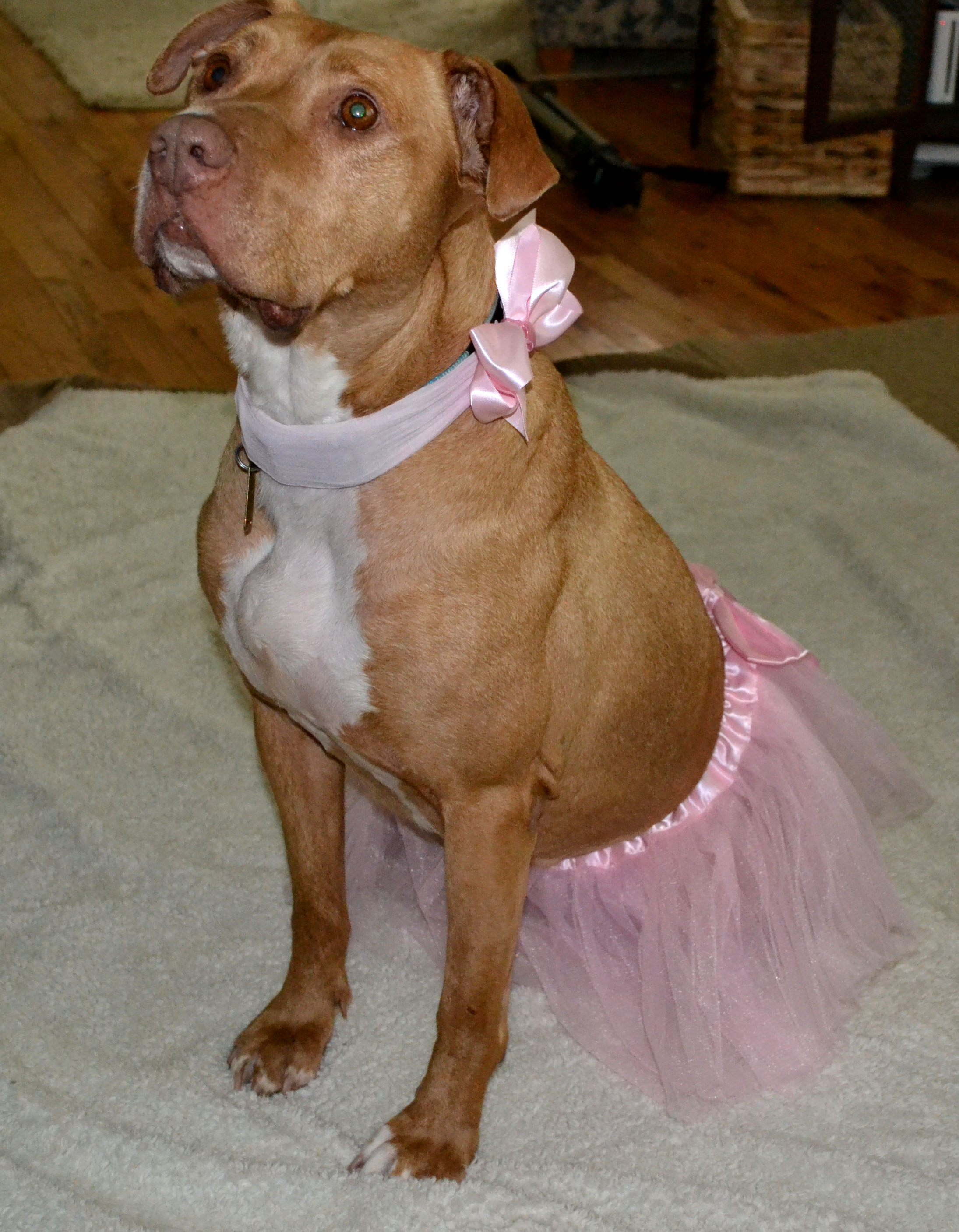 Dog Halloween Costumes | Our Waldo Bungie